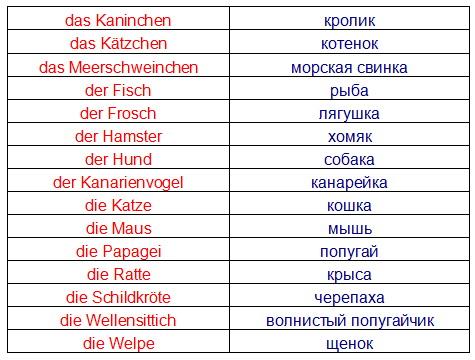 немецкий язык шутки знакомство