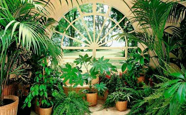 Разговор про растения на немецком языке