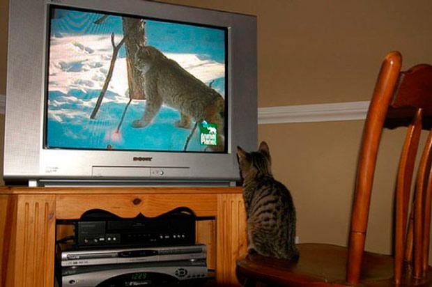 посмотреть телевизор