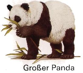 der Große Panda