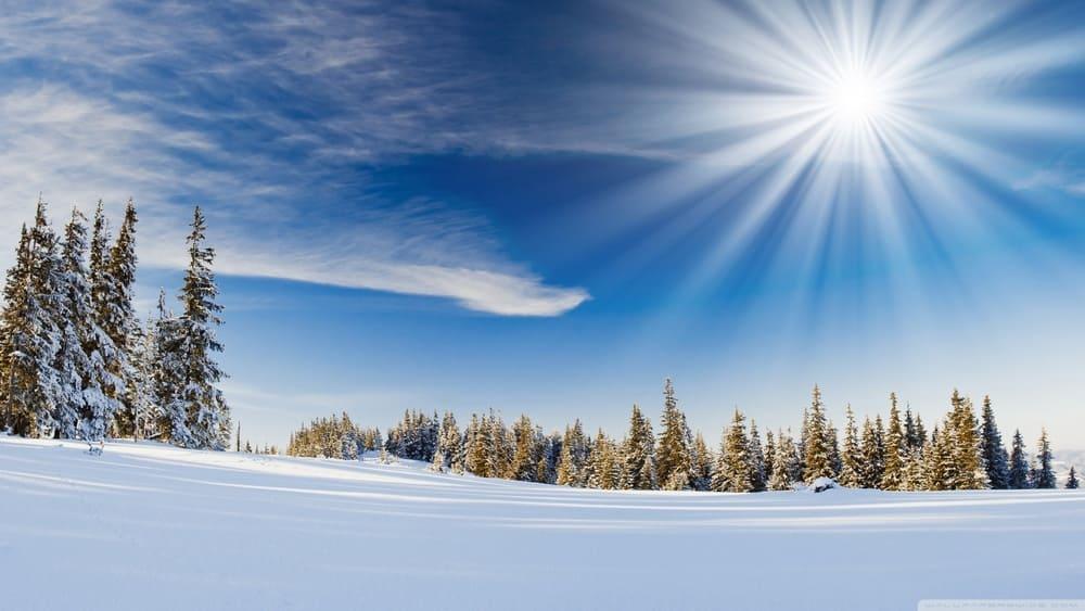 лес в снегу