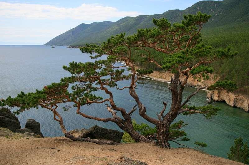 Тема Озеро Байкал рассказ текст с переводом Немецкий язык  растения
