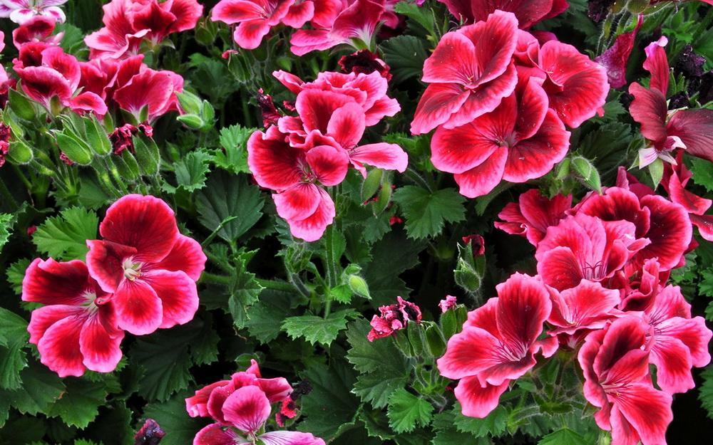 как выглядит цветок