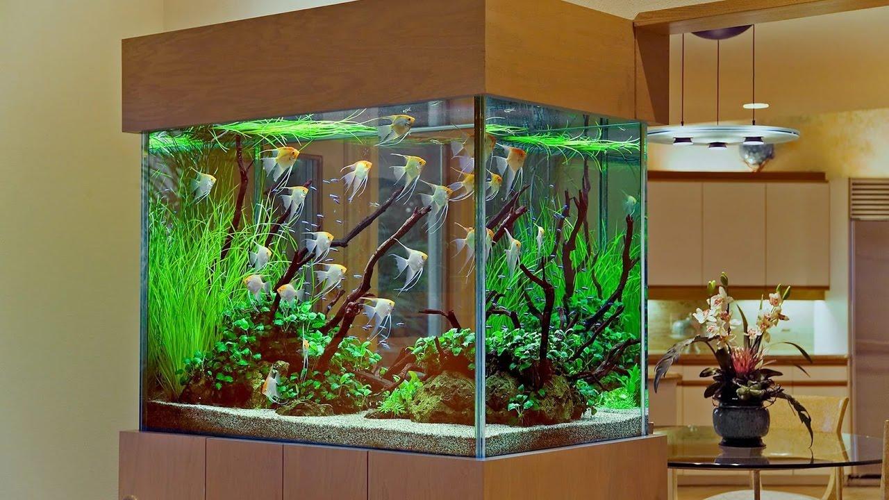 рыбки в квартире