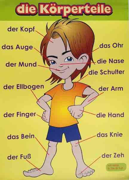 Части тела на немецком языке