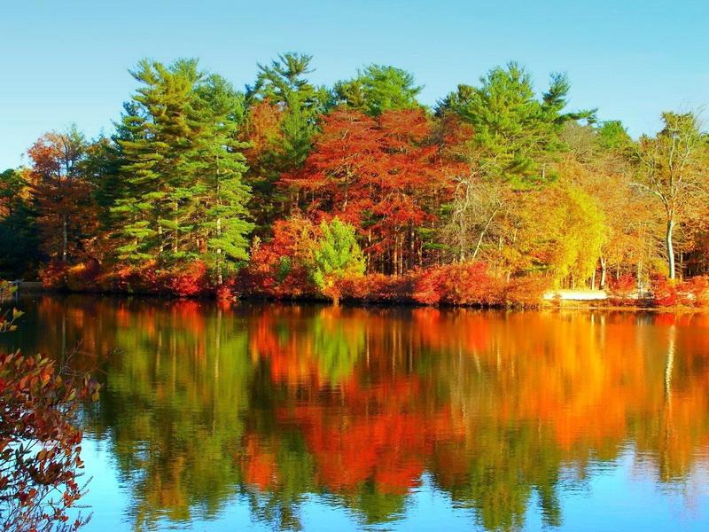 озеро, лес