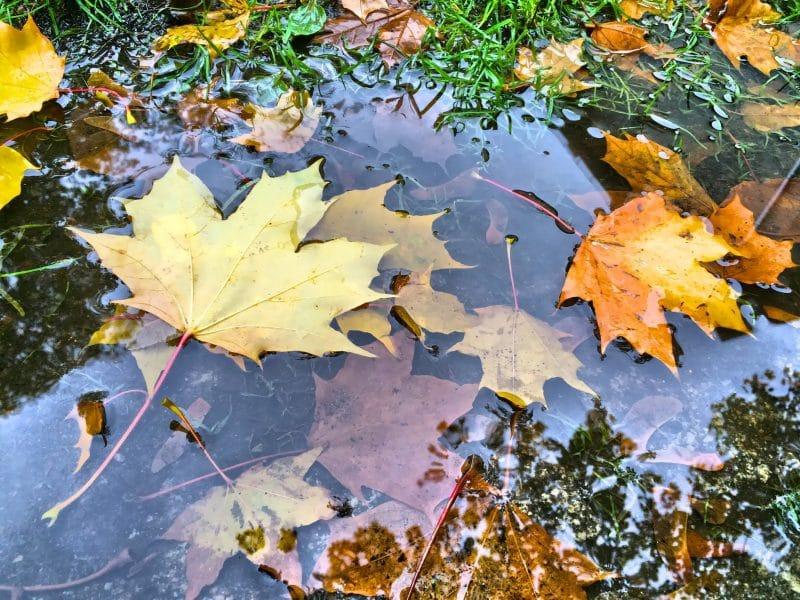 текст и стихотворение про осень